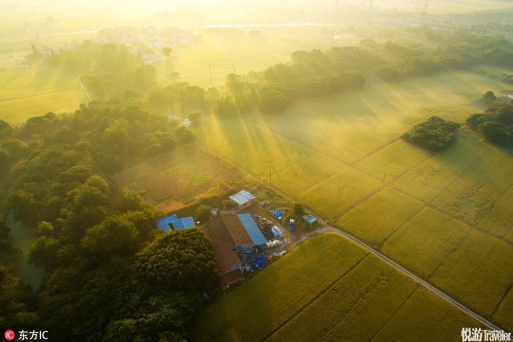 上帝眼中無錫新農村的秋色是什么樣的?滿眼的金黃和秋收的喜悅。秋天是收獲的季節,現在正是江南割稻的季...