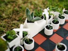 绿意盎然的盆菜国际象棋