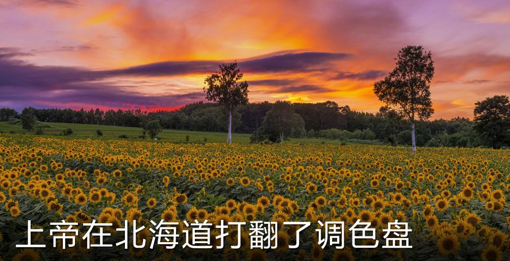 遇见北海道之夏 上帝在这里打翻了调色盘