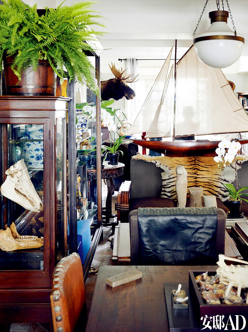 客厅的另一侧,摆满了各式宝物,叶裕清钟爱动物标本,其沙发上的老虎皮是友人吴宝先生所赠。