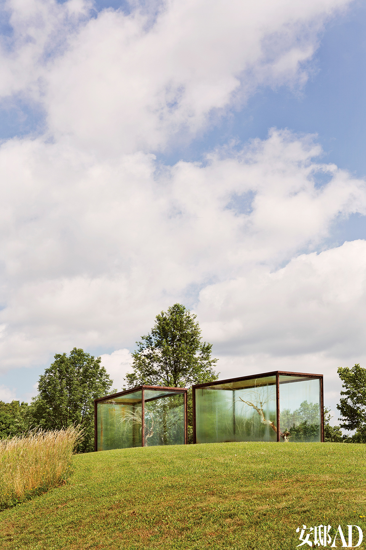 院子里,玻璃罩住的是艺术家史金淞的雕塑装置,漂白过的树。