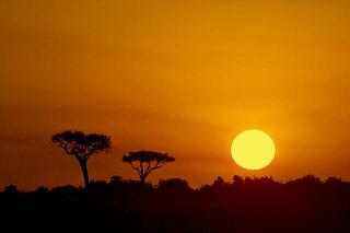 野兽乐园 On Safari