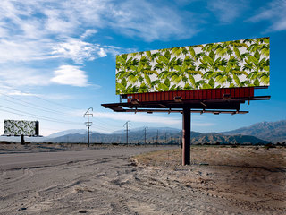 沙漠中的墙纸 Wallpaper Freedom