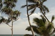 坦加勒、韋利加馬(Weligama)和本托塔(Bentota)位于南部海岸線,這里通常風浪較大大,你能看到城鎮邊...