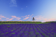 日本薰衣草盛放宛如美丽紫色闪耀的地毯!而你等待的那份爱情是否有了结果呢?携手走进紫色的花海,许下爱...