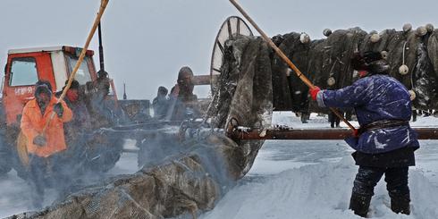 呼倫湖冬捕,冰天雪地里的美味盛宴