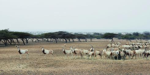 阿布扎比,沙漠中的瘋狂動物城
