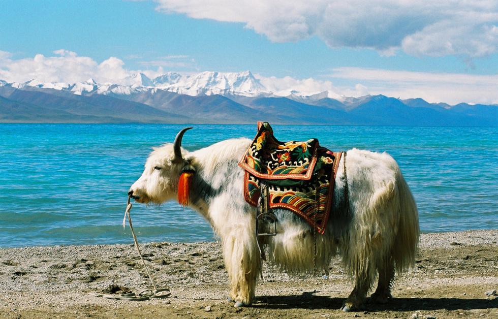 纳木措推荐理由:选择去拍西藏纳木错婚纱照