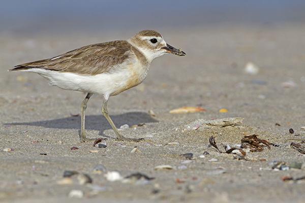 swift破坏珍稀鸟类栖息地?