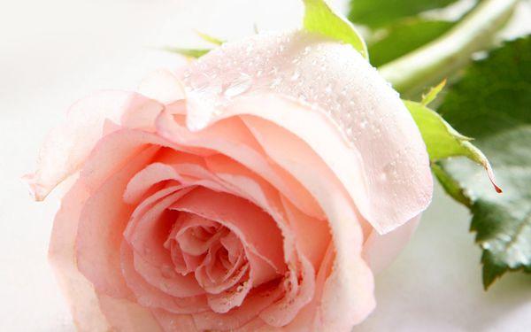 玫瑰花动态边框图片