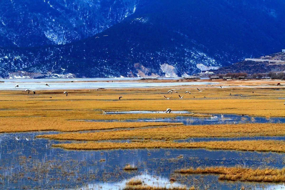 秋天的香格里拉已是遍地的血色狼毒花,若你走进香格里拉的纳帕海,映入眼帘的是金色的草原、皑皑的雪山和充满灵性的各种鸟类。 另外,香格里拉的千湖山藏语称拉姆冬措,意为神女千湖或仙女千湖 ,以三碧海、大黑海为中心,向四周散开,由数以千计的小湖组成。这些湖有的圆若明镜,有的长似游鱼,有的半环于山洼深处,有的掩映于杜鹃丛中,有的孤悬于草甸中间,有的水色深沉似无底深渊,千姿百态。