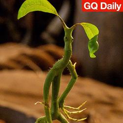 《哈利·波特GO》?神奇动物和神奇宝贝果然有一腿 | GQ Daily