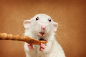 萌宠老鼠也疯狂