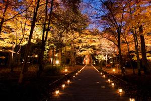 金秋森林浪漫之地 輕井澤HBC度假村邀你免費入住