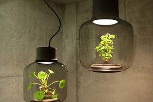Mygdal:照明和綠植的完美結合