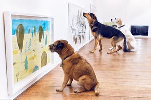 伦敦专为狗狗办艺术展 汪星人聚精会神欣赏画作