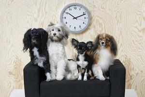 拍写真、住豪宅,猫狗的生活比你好一千倍 | GQ Daily