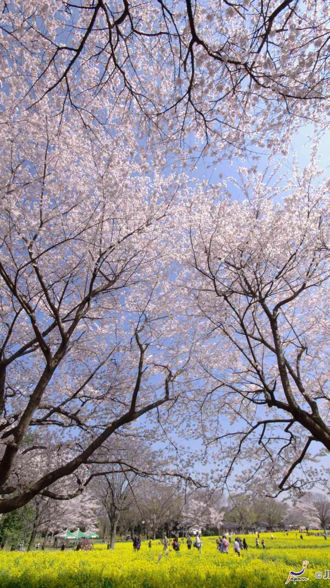 壁纸 花 树 桌面 1080_1920 竖版 竖屏 手机