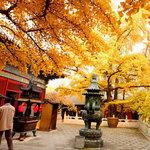 自驾游邂逅京郊七大最美旅行地
