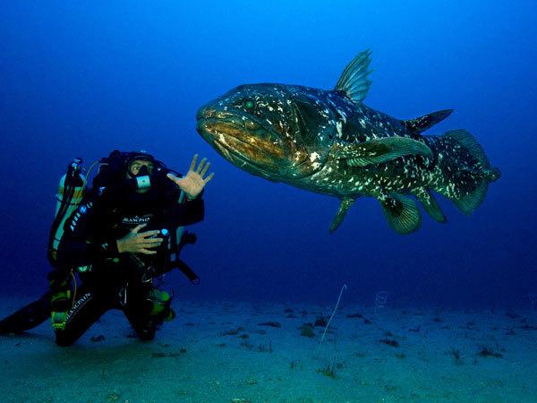 Blancpain宝珀支持腔棘鱼Gombessa展览