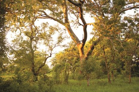 【已开奖】【撑起肌肤青春弹簧】和Origins悦木之源一起探索非洲榆绿木,立即跟帖赢免费体验装!