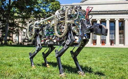 疯狂动物园? 4款萌爆了的机器人设计