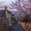 万紫千红总是春 初春赏花听风妙不可言