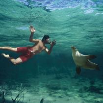 """南澳艾尔半岛——澳大利亚的海鲜""""鲜""""境"""