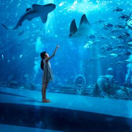 一站式伴游体验亲子潮玩地诞生 实现与海共眠的极致体验
