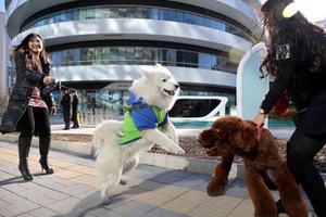 北京街头现美女遛狗团 呼吁关爱动物尊重生命
